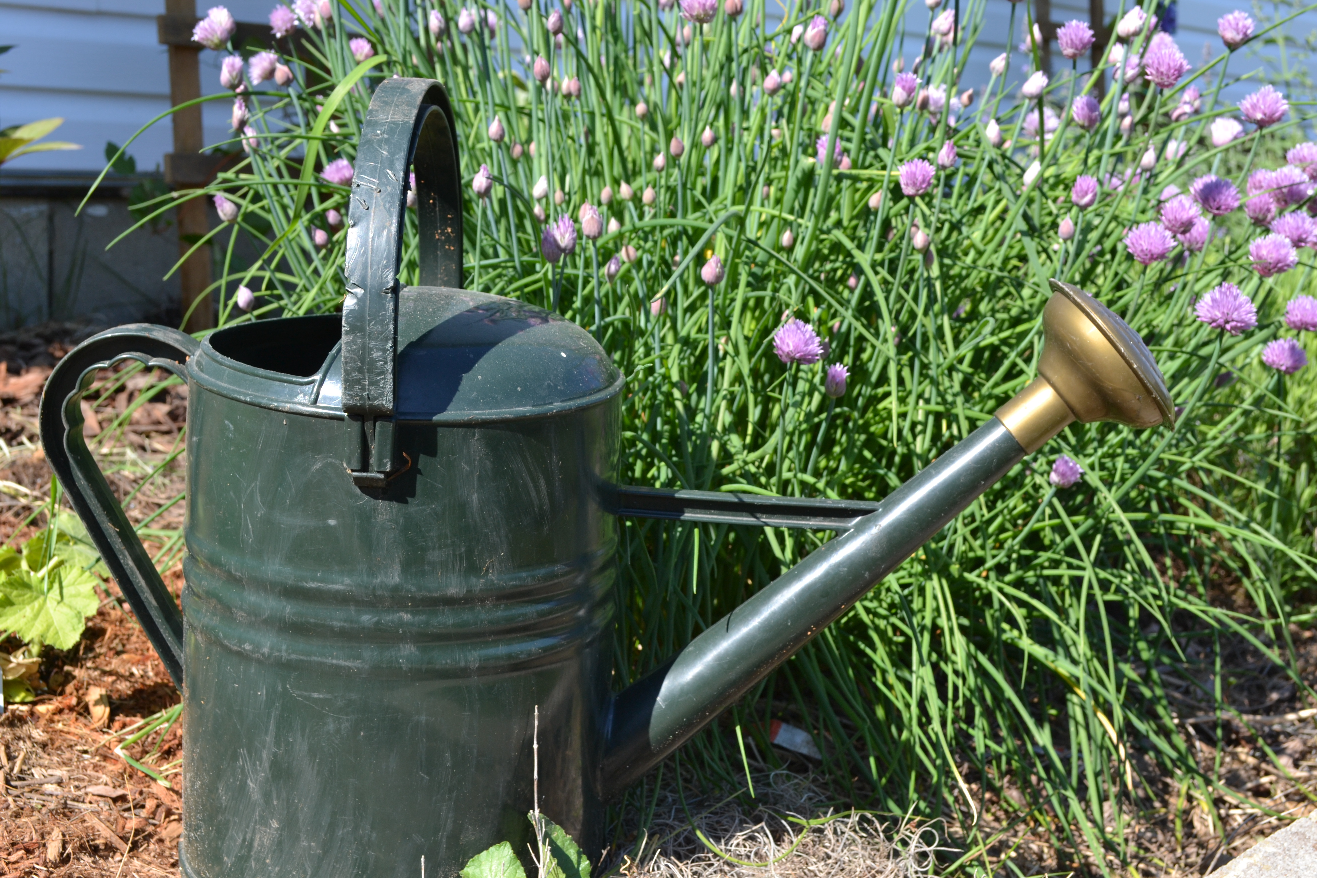 How much water is enough for your garden try the finger test rmsiblog - Sprinkling cans ...