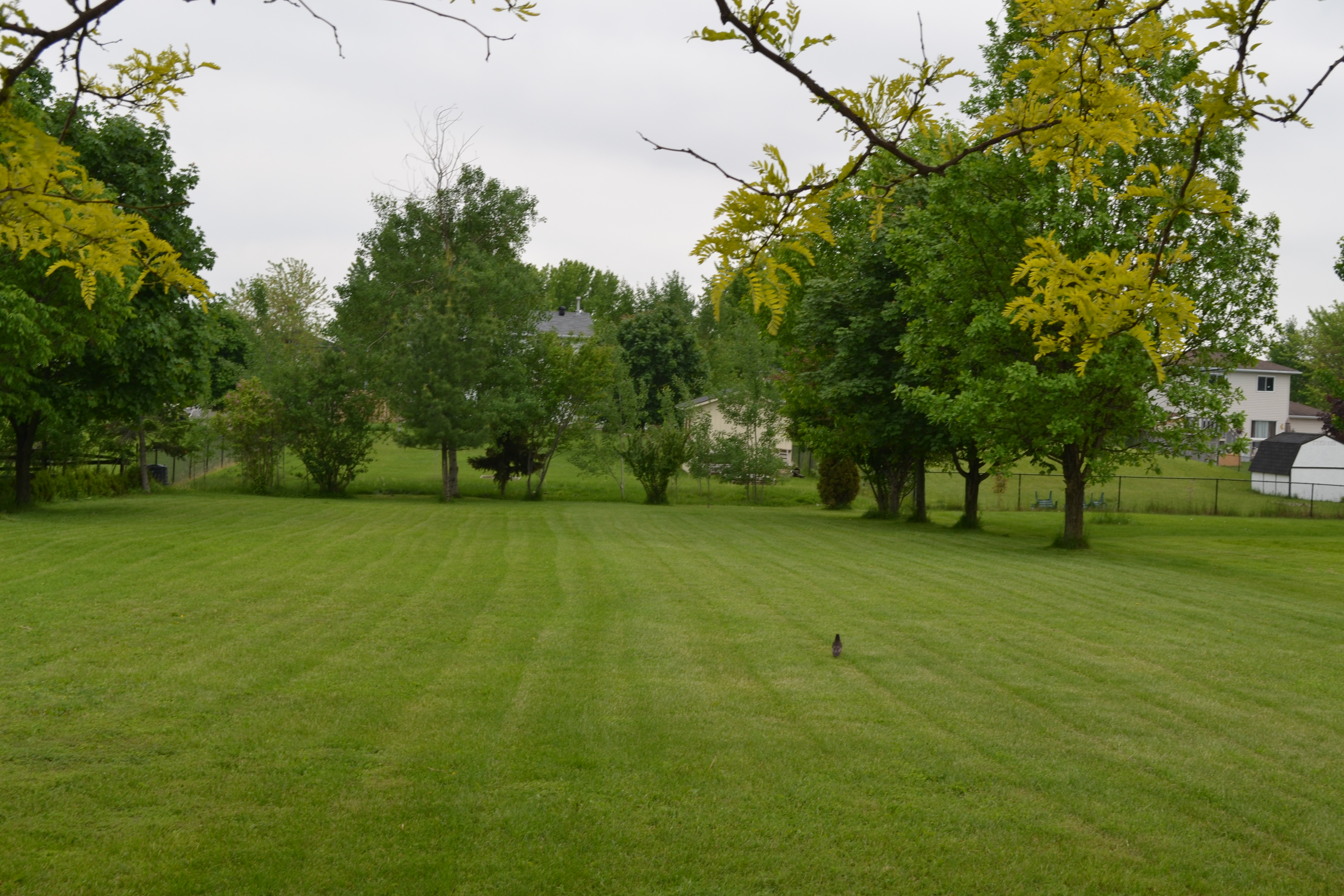 Lawn care rmsiblog for Lawn and landscape
